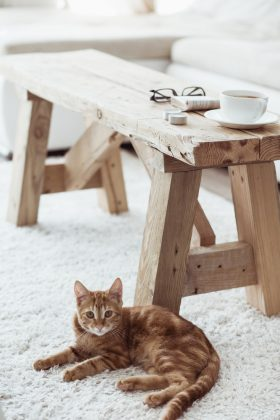 Kattenpis – kleding
