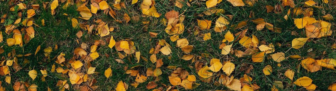 Afgevallen bladeren, wat doe je ermee?