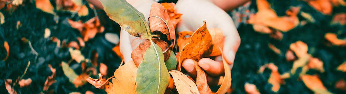 8 tips om je tuin en terras winterklaar te maken