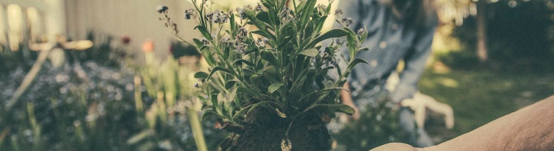 Maak je tuin lenteklaar in 1-2-3