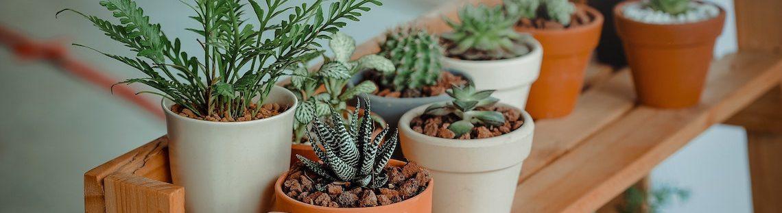 Stralende planten? 9 tips om ze te verzorgen