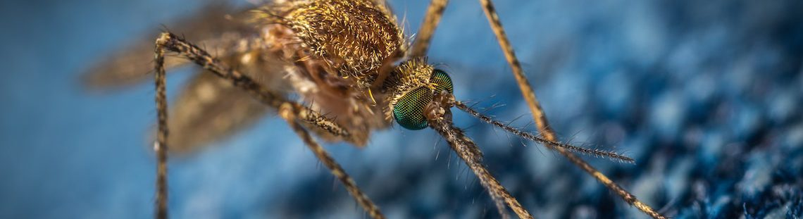 Muggen weghouden? Dat doe je met deze tips
