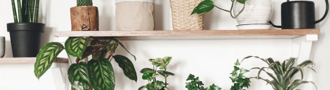 Planten in huis: 5 makkelijk te onderhouden kamerplanten