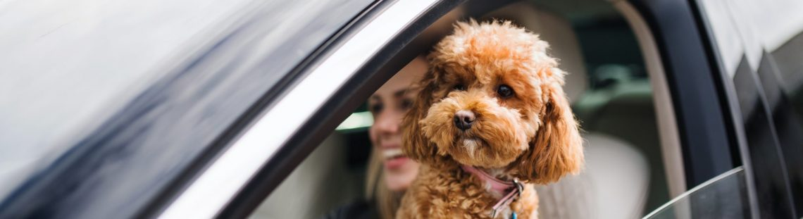 Op reis met je huisdier: zo doe je het